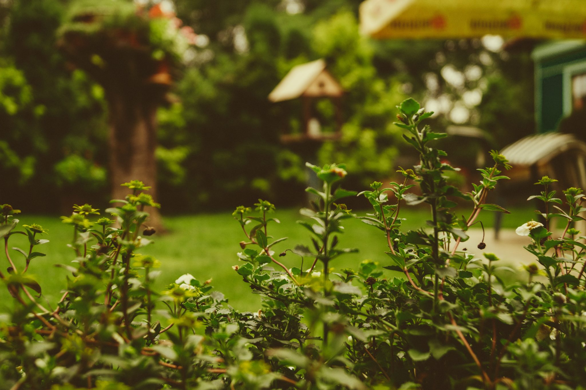 Getting your backyard party ready can seem to be an immense task. BUT you can get all you need to get done to host that outdoor BBQ quickly—and cheaply too. Most of these tips and ideas can be completed all in one weekend, if you're up for it. And why not knock them all out at once? Then you can celebrate. With a party. Tip one - clean up the backyard and clear a space