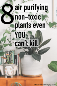 the best non-toxic air purifying plants to keep you home clean and free from harmful chemicals! #nontoxic #greenliving #plants #airpurifyingplants #home #hometips #chemicalfree #livingchemicalfree #homemanagement #healthyliving #health #nontoxicliving #houseplants #pets #safeforpets #petsafe #safeforkids #bathroom #apartments #decor #homedecor #livingrooms #hangingplants