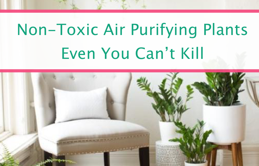 Best Low Maintenance Non-Toxic Air Purifying Plants For Your Home