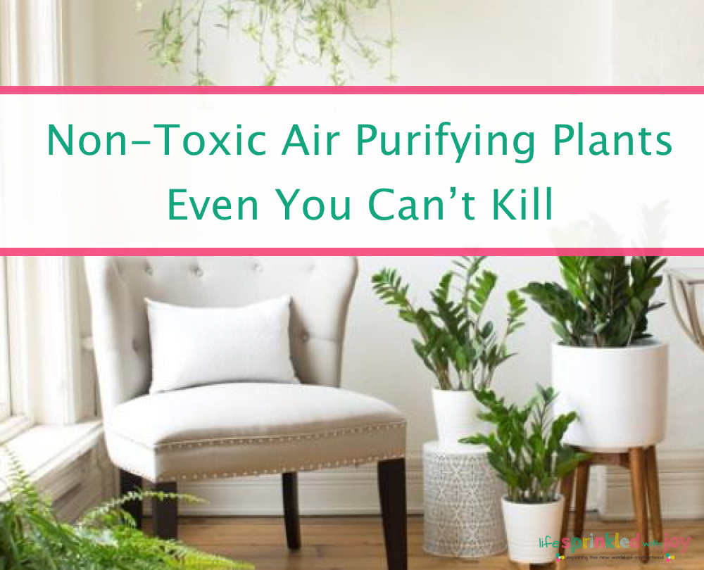 Best Low Maintenance Non-Toxic Air Purifying Plants For Your Home ...